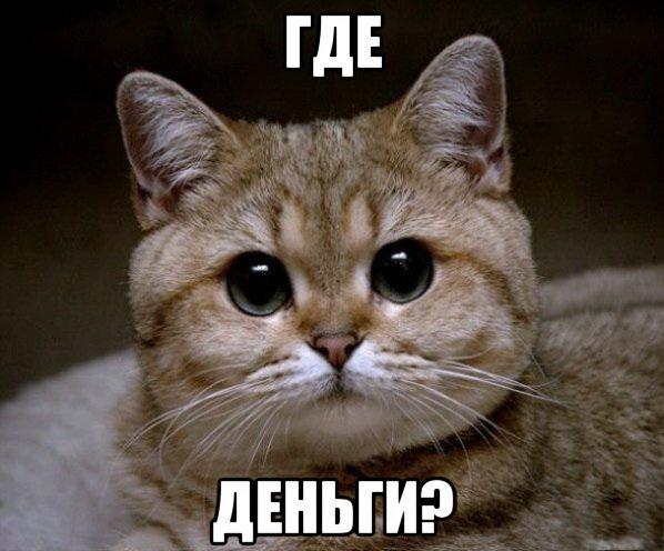 кот (где деньги)